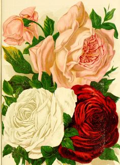 The new guide to rose culture : 1889