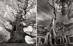 Fantastische oude boom