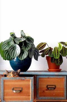 Green Bubble, Plants Are Friends, Garden Journal, Calathea, Simple Pleasures, Cool Wallpaper, Home Decor Inspiration, Indoor Plants, House Plants