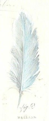Feather blue...