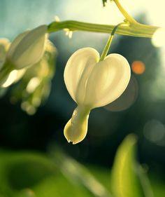 White Heart by k. r., via 500px