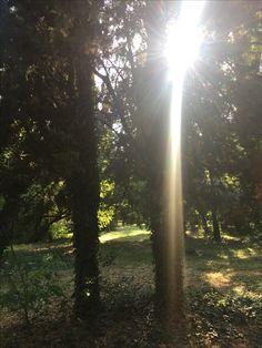 Проход в мир лесных духов