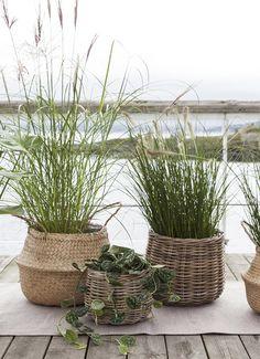 Grønne planter i seagrass kurv