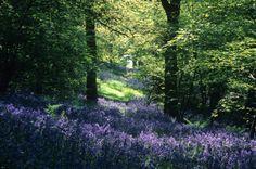 FoD 024 - Alne Wood.jpg (746×496)