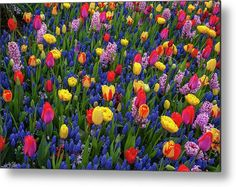 Keukenhof Motley Flower Carpet Metal Print by Jenny Rainbow. All metal prints are professionally printed, packaged, and shipped within 3 - 4 business days and delivered ready-to-hang on your wall. Choose from multiple sizes and mounting options. Beautiful Flowers Garden, All Flowers, Spring Flowers, Wall Prints, Fine Art Prints, Art Techniques, Fine Art Photography, Home Art, Fine Art America