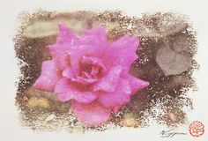Flower of Pink Rose where my signature and the stamp were in