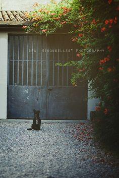Alertness by *Les Hirondelles* Photography, via Flickr