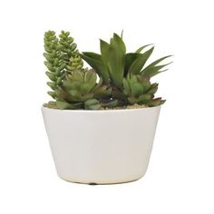 Artificial Mixed Succulents in Round White Ceramic (€15) ❤ liked on Polyvore featuring home, home decor, floral decor, fillers, plants, nature, fillers - plants, ceramic home decor, white home decor and white home accessories