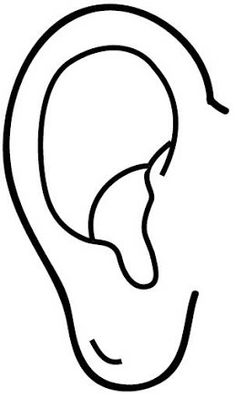 Duyu organlari