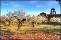 https://flic.kr/p/TysB97 | (1796) El despertar dels arbres |   Desert de les Palmes  (Plana Alta) País Valencià //// ************************* - Please don't use this image on websites, blogs or other media without my explicit permission. © All rights reserved                                Contact: joanot@cmail.cat No awards, please!    -------------------------------- Flickr ► - 500px ► - Google+ ► - Pinterest ► - Show ► - Portfotolio  ►  -  Fluidr  ►  -  Flickefku ►   -  Flickriver  ►…