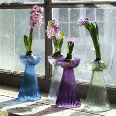 Hyacinth Bulb Vases Set: Gardenista