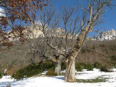 Cresterío y Roble del  #ParqueNaturalLokiz #TurismoNavarra  #EstellaLizarra  #TurismoEstella  #ValleMetauten   http://www.casaruralnavarra-urbasaurederra.com