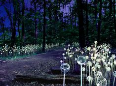 Longwood Gardens' Blockbuster Light Installation By Bruce Munro debuts June 9; watch the stunning time-lapsed video of the installation. (Photo courtesy Longwood Gardens)