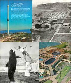 Marineland - California's first Major Theme Park ~ another happy memory! San Pedro California, Places In California, California History, California Love, Vintage California, Southern California, Beautiful Places To Visit, Places To See, Great Memories
