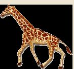 Wild Animals And Wild Animal Moving Animations Giraffe Images, Giraffe Pictures, Animiertes Gif, Clipart, Beatles, Van, Animation, Deviantart, Walking