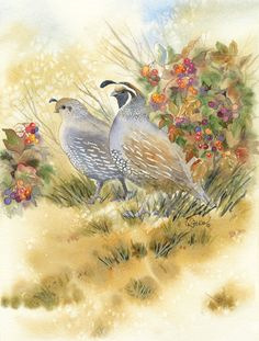 Reiko Hervin ~ Quail ~ Watercolor Art Watercolor, Quails, Lone Tree, Work With Animals, Wildlife Art, Pet Birds, Painting & Drawing, Watercolors, Amazing Art
