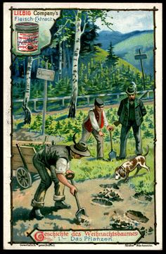 """Liebig's Beef Extract  """"The Christmas Tree"""" German issue, 1901."""
