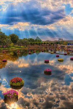 I love to stand here, listen to the music from Future World and watch the fish and turtles.