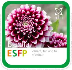What MBTI plant type are you? ESFP