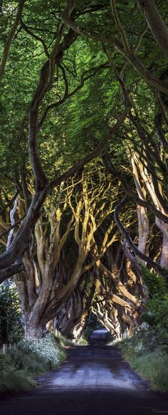 The Dark Hedges Co. Antrim, Bregagh Road, Northern Ireland        Check Out The Most Majestically Trees In The World!