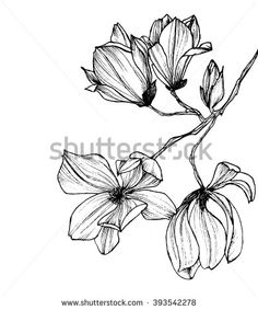 Flower Drawing Black And White Stock Photos, Images, & Pictures | Shutterstock