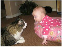 にらめっこ   #neko #cat