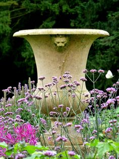 Verbena bonariensis around great urn.  They grow about as good as a weed, but you can have masses of them.  They are also a hardy cut flower...Neal
