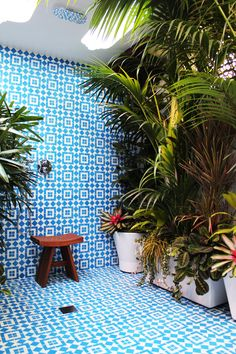 What a shower! All I can picture is a lizard running out of those plants, and there I am trying to run around naked in a wet shower... Oh no way!!!