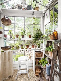 The backyard greenhouse trend is here to stay,and gardeners are gettingmore creative than ever. Take a look at this family's mini greenhouse madefrom antiqueglass windows that they built for $500. Diy Greenhouse Plans, Window Greenhouse, Lean To Greenhouse, Outdoor Greenhouse, Cheap Greenhouse, Greenhouse Gardening, Greenhouse Wedding, Homemade Greenhouse, Portable Greenhouse