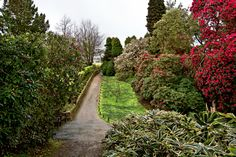 The Lost Gardens of Heligan in Cornwall, England, bursting with spring blooms