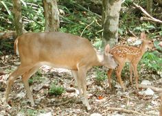 Spend a great family weekend in harmony with nature in Aktun-Chen! #aktunchen #naturalpark #mexico #nature