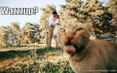 Cat bombed   Instant Meme Maker