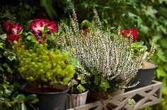 #plantas del #jardin de #nelybelula #conceptstore