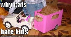 On the next Oprah: Why cats hate kids.