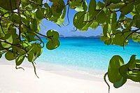 Looking through the seagrape leaves  Honeymoon Beach  Virgin Islands National Park.  St John  U.S. Virgin Islands
