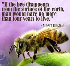 If the bee disappears from the surface of the earth, man would have no more than four years to live.