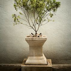 Symmetry By Sharath Padaki. This is a Tulsi plant (Ocimum tenuiflorum) which is worshipped in Hindu culture and it is also believed to have powerful healing qualities.
