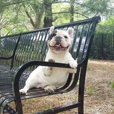 Back at the park...Exercise is overrated. Sitting is where its at!
