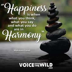 """Happiness is when what you think, what you say and what you do are in harmony"" ~ Mahatma Gandi #voicefromthewild"