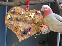 Valentine's Day parrot foraging toy