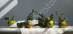 SIX WILD APPLES by Larry Preston Oil ~ 12 x 25 time lapse video link https://www.youtube.com/watch?v=tDWAHepCOls