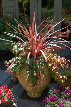 Container Gardening great container planting - Here are our favorite easy-to-grow foliage plants that thrive in containers. Flowers rock, but foliage plants can be even more interesting. Container Flowers, Container Plants, Container Gardening, Foliage Plants, Potted Plants, Pot Plante, Garden Planters, Fall Planters, Dream Garden