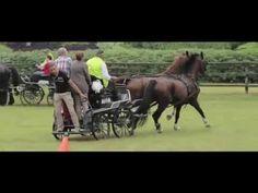 Paarden Mennen | BuitenBusiness | Inspirerende activiteiten op bijzondere locaties - YouTube