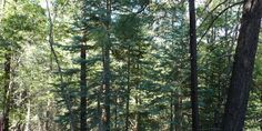 1.1 acres in the tall pines of #Prescott #Az. Give us a call for more information (928)-533-9413