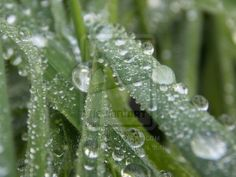 A most amazing close up of water drops on a single grass leaf.
