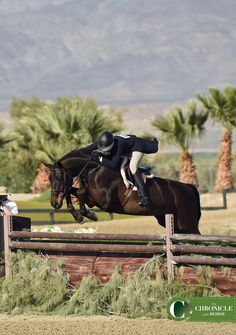 Jumping Horses, Star Stable, Dream Barn, Hunter Jumper, Show Jumping, Horse Pictures, Show Horses, Dressage, Cross Country
