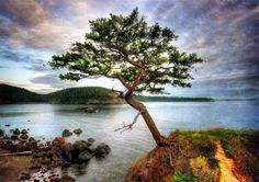 Tree/coastline