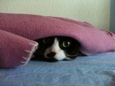 Ibland vill man bara gömma sig under en filt och glömma omvärlden.