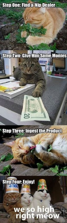 How to do Cat Nip