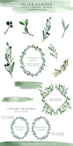 Watercolor Olive Branch Clipart, Rustic Greenery Wedding Invitation Graphics, Modern Floral Watercolor Backgrounds for Business Cards, Hand Painted Floral Floral Watercolor Background, Watercolor Art, Watercolor Effects, Garden Party Invitations, Birthday Invitations, Painted Branches, Olive Wreath, Illustration Blume, Corona Floral